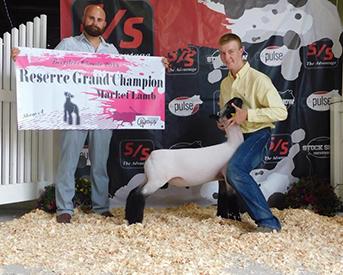 Farao Club Lambs :: Winners